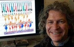 Forecast calls for nanoflowers to help return eyesight