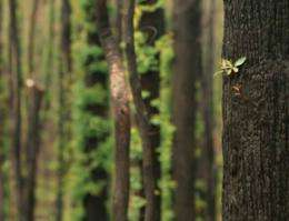 Forest logging increases risk of mega fires