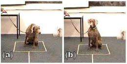 How dogs make sense of size
