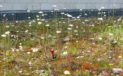 How green are green roofs?
