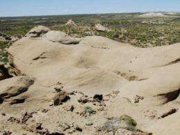 Human, artificial intelligence join forces to pinpoint fossil locations