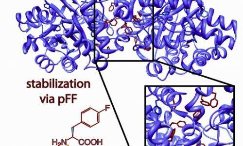 Inspired by teflon, researchers create super durable proteins