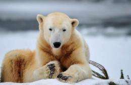 Knut was abandoned by his mother