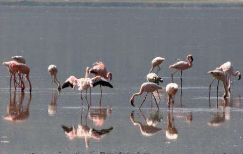 Lake Natron has a maximum depth of 50 centimetres (20 inches) and lies at the foot of a volcano