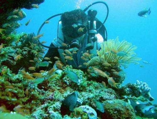 Local dive master Joel Pandino shows coral reef formation in the Verde sea passage