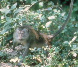 Monkeys have better basic counting skills than originally thought