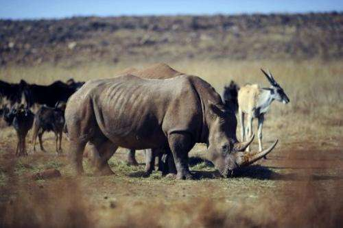 Nearly 200 rhinos were killed in South Africa in the first half of 2011