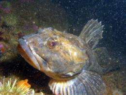 Neutron science explains mystery of how Arctic fish's antifreeze proteins work