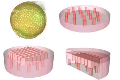 New dermal templates could help heal wounds