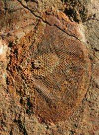 New fossils demonstrate that powerful eyes evolved in a twinkling