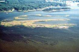 New study provides global analysis of seagrass extinction risk