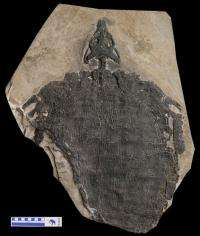 New Triassic Diapsid reptile found in Southwestern China