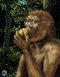 'Nutcracker Man' had fundamentally different diet