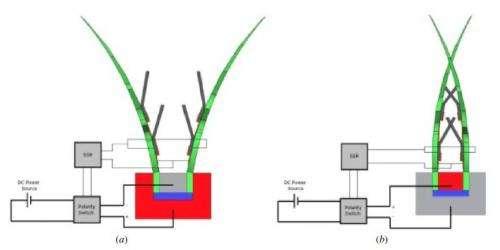 Mechanical engineer creates robot Venus Flytrap on