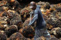 Palm oil represents about 35 percent of the global vegetable oil market and production is expected to double