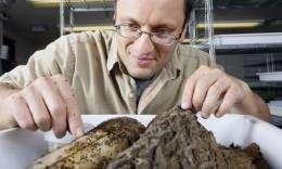 Pesky ants found in Hawaii demonstrate invasive characteristics