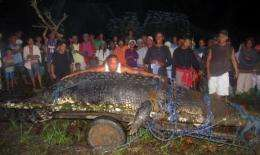 Philippine officials are planning to use the giant crocodile as a tourist attraction once it adapts to its cage