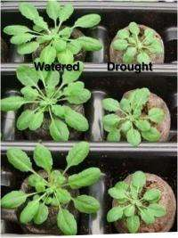 Plant biology meets up with computational wizardry