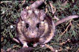 Rats control appetite for poison
