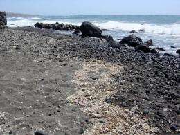 Rock rafts could be 'cradle of life'