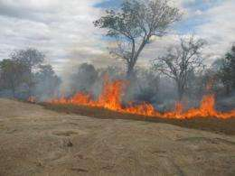Savannas, forests in a battle of the biomes, Princeton researchers find