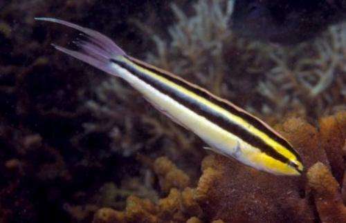 Scienists have discovered eight new fish and one new coral species off Indonesia's Bali island