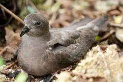 Seabird campaign highlights value of species identification