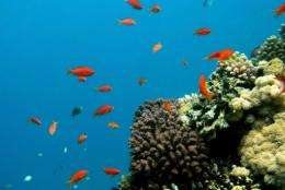 Shell has been given permission to drill for gas at an Australian  reef that has been listed as a World Heritage site