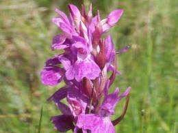 Speeding up evolution: Orchid epigenetics