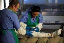 Staff work on the mummification process for 'Torquay Tutankhamun' Alan Billis