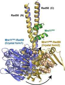 Structure of DNA repair complex reveals workings of powerful cell motor
