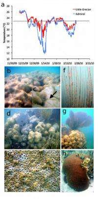 Study: Severe low temperatures devastate coral reefs in Florida Keys