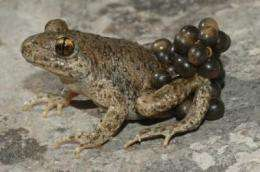 The end is in sight for amphibian fungal disease