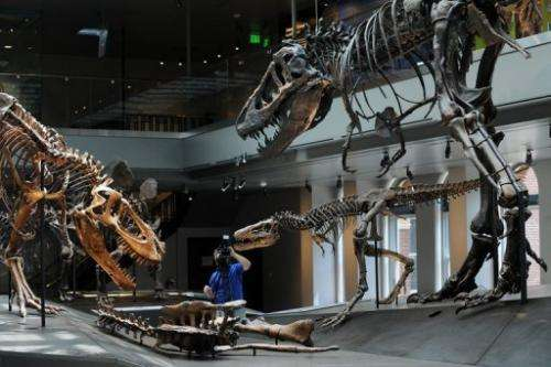 The gallery includes several large specimens, including a group of three skeletons of Tyrannosaurus rex
