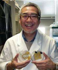 "Toshiyuki Nakagaki's work using slime to better understand intelligence has been recognised with ""Ig Nobel"" awards"