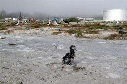 Tsunami killed thousands of seabirds at Midway (AP)