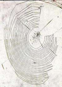 Web weaving skills provide clues to aging