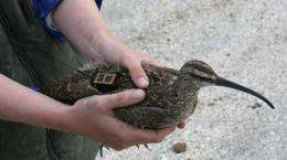 Whimbrel successfully negotiates most severe part of Hurricane Irene