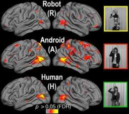 Your brain on androids