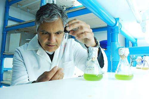 Algal bloom species with two deadly toxins could disrupt marine food web