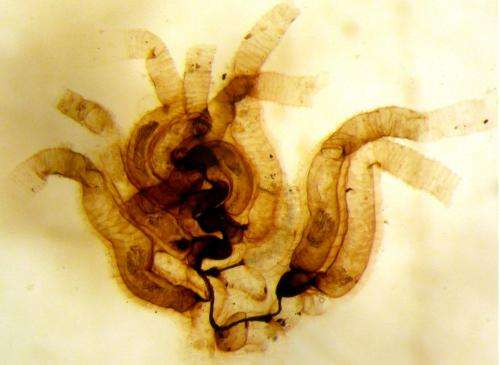 Ancient, bottom-dwelling critter proves: Newer isn't always better