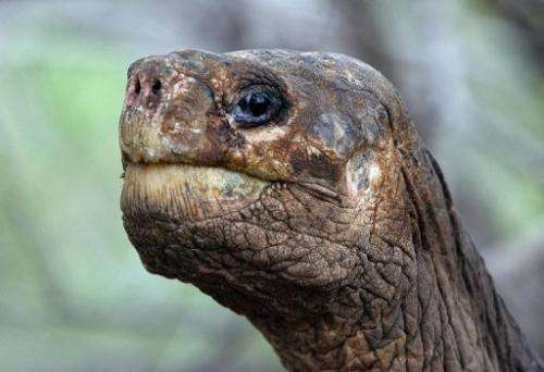 An international workshop is to be held in July on strategies for restoring tortoise populations, in George's memory