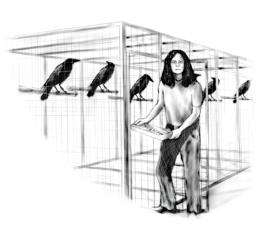 Crows react to threats in human-like way: Neural basis of crows' knack for face recognition