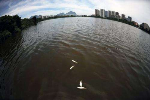 Dead fish float in the Marapendi lagoon in the Barra de Tijuca neighbourhood of Rio de Janeiro on December 11, 2012