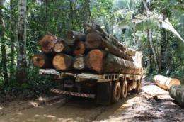 Deforestation in the Amazon equals net losses of diversity for microbial communities