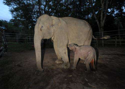 Elephant born in Banda Aceh conservation camp