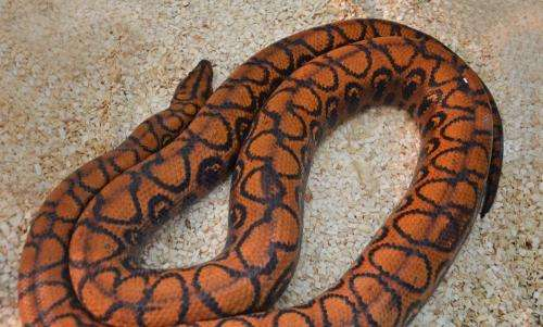 Flexible snake armour: Biology could inspire systems in engineering with minimized abrasion