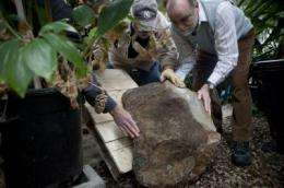 Floor of oldest forest discovered in Schoharie County