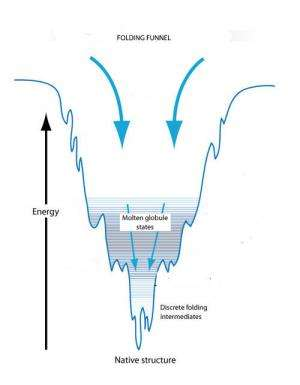 Folding funnels key to biomimicry