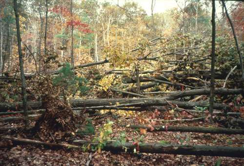 Harvard Forest's response to CO2 reveals past and future for the New England landscape